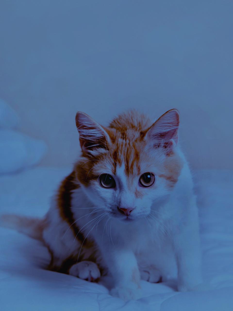 Kitten Sneezing A Lot