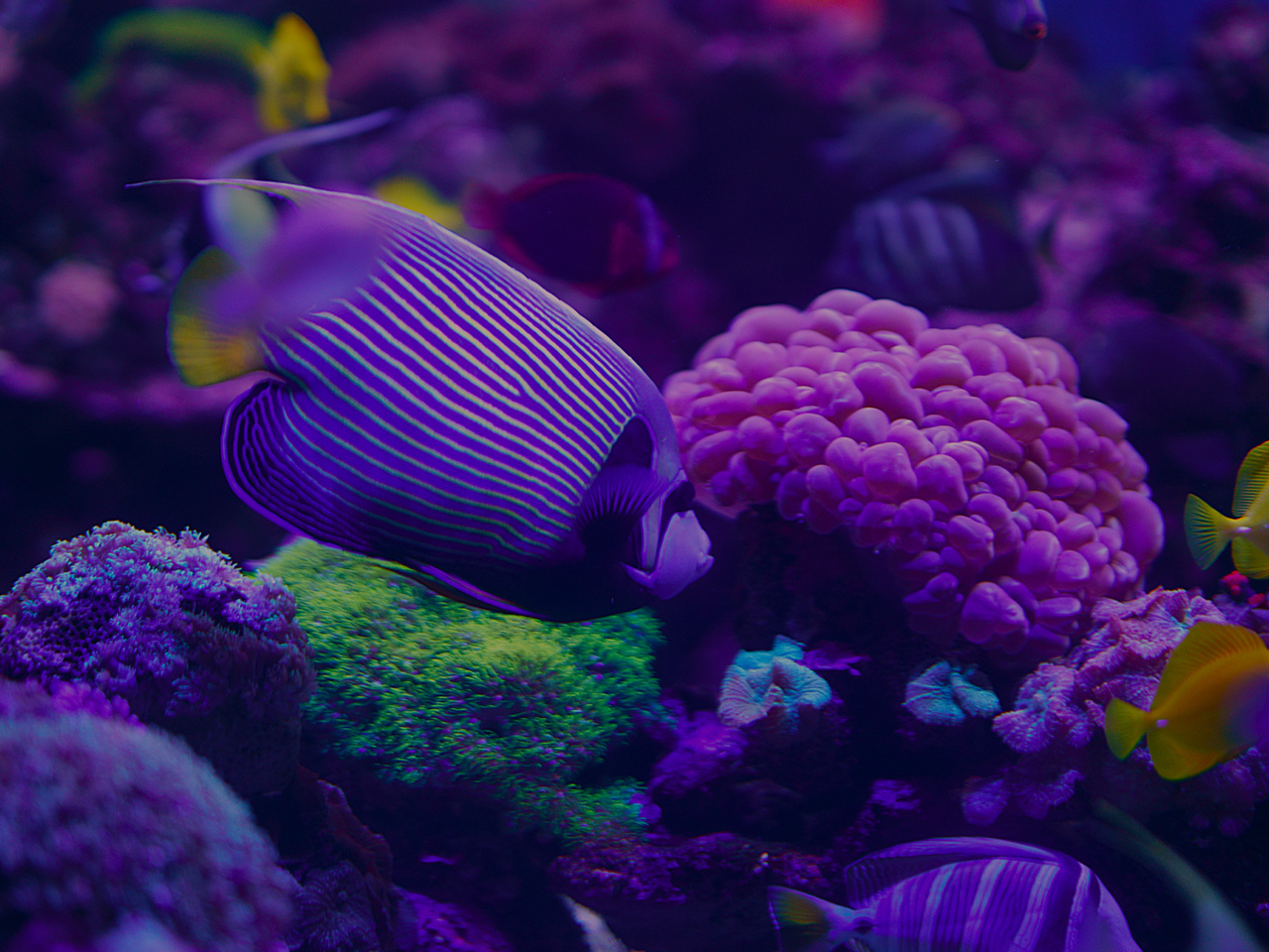 Coral Reef Animals - photo#24
